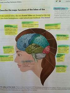 The 25  Best Function Of Cerebral Cortex Ideas On