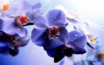 Orchid Purple Wallpapers Orchids Flower Wall Lovely