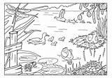 Kleurplaat Lente Kleurplaten Dieren Coloring Sloot Pond Kikker Google Animals Kikkerdril Kikkervisje Kikkervisjes Tot Kleuterschool Ashx Thema Liedjes Downloaden Inheemse sketch template