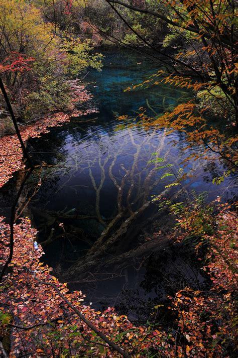 underwater tree  jiuzhaigou valley colossal