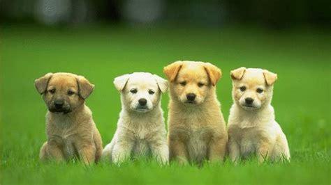 desktop hd funny dog  puppy pics