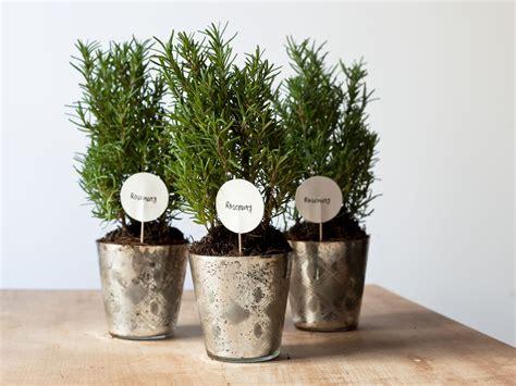 10 Easy And Edible Wedding Favors Garden Creations