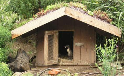 Laufenten Tipps Zur Haltung Und Pflege  Mein Schöner Garten