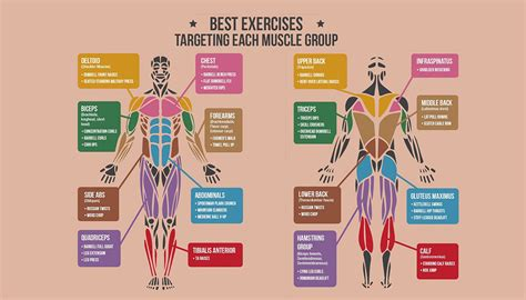 exercises  targeting  muscle group nrg fitness