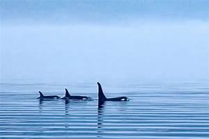 Whaletrips