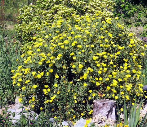 southern california plants plants comprehensive southern california native landscaping