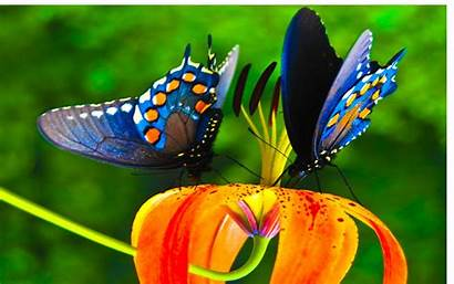 Colorful Butterfly Nice Wallpapers Background Butterflies Flower