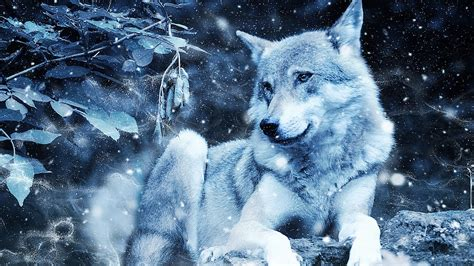 Wolf Wallpaper Real by Wallpaper Wolf Photoshop Predator Wildlife Hd Picture