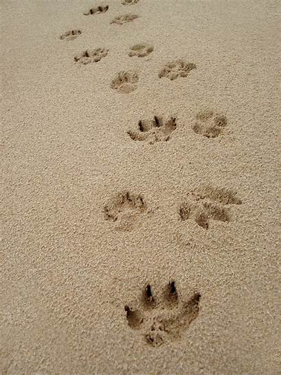 Sand Paw Prints Animal Matters Wellness Pet
