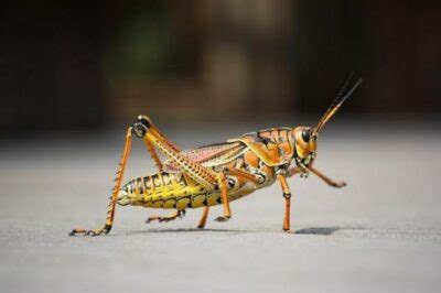 Apa ciri-ciri Hewan Invertebrata - Hisham.id
