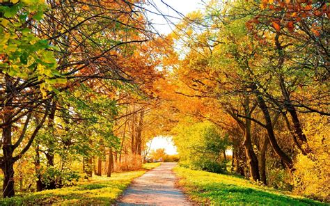 Beautiful Autumn Trees Wallpapers by 1280x800 Beautiful Autumn Trees Path Desktop Pc And Mac