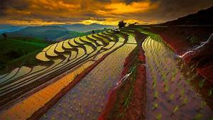 Rice Field Thailand | Download HD Wallpapers