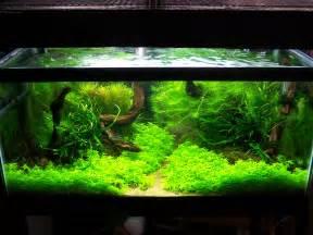 aquarium designer adventures in aquascaping