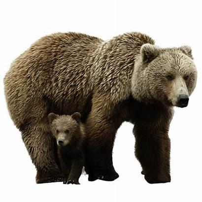 Bear Panda Transparent Purepng Thumbnail Animals