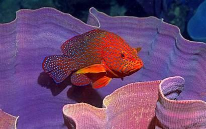 Fish Ocean Sealife Sea Underwater Fishes Desktop