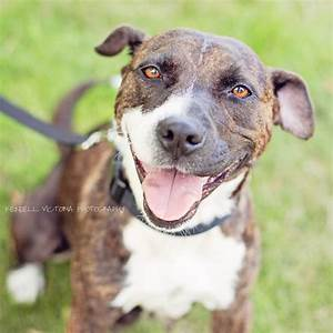 puppy photography for secondhand hounds minnesota dog rescue