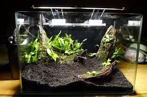 Die Besten Aquarien : aquarium einrichten anleitung aquarium einrichten ~ Lizthompson.info Haus und Dekorationen