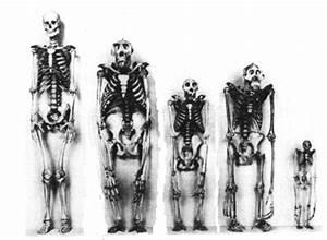 JESUS NEEDS MONEY: Pelvis and Hip Bone - human evolution