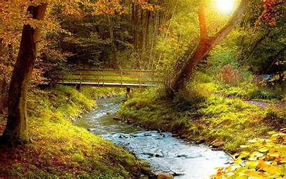 Stream Forest Desktop Wallpapers Windows Autumn Backgrounds