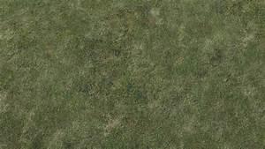 grass texture map