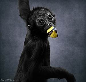 Cute Baby Spider Monkey  Explore