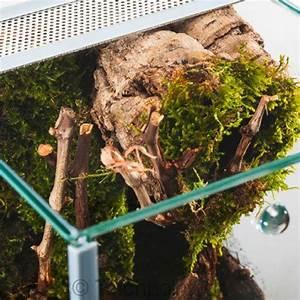 Große Reptilien Für Zuhause : glas terrarium f r spinnen glasterrarium fallt r ~ Lizthompson.info Haus und Dekorationen