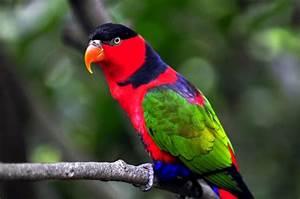 Birds Pigeons Pakistan: Parrot Birds Wallpapers