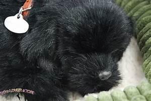 Black Lab Life Like Stuffed Animal Breathing Dog Perfect ...