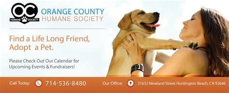 web banner  animal shelter google search gcse