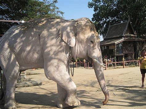 white elephant pin white elephant on pinterest