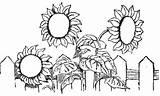 Coloring Fence Flower Spring Sun Flowers Fall Luna 29kb 364px Colorluna sketch template
