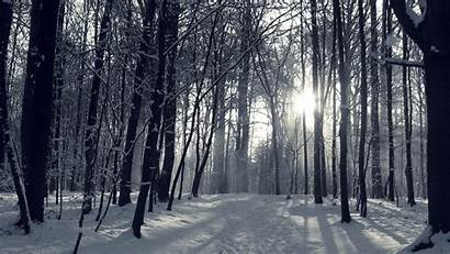 Forest Winter Snowy Wallpapers