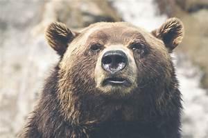 Und Der Bär : der b r und kr t electriciannarellan ~ Orissabook.com Haus und Dekorationen