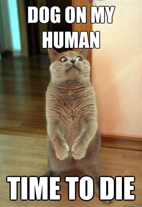 Dog On My Human Cat Meme  Cat Planet  Cat Planet