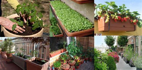 come fare l orto sul terrazzo l orto in terrazzo come realizzarne uno a casa