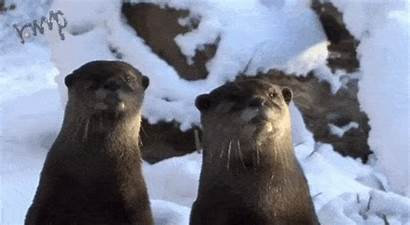 Snow Otters Playing Winter Giphy Won Animated