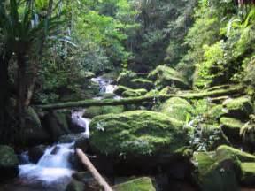 Beautiful African Jungle