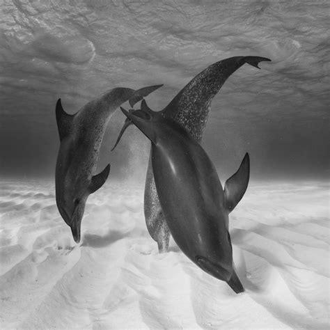 Ganz Schöne Bilder by 1001 Ideen Zum Thema Sch 246 Ne Delfine Bilder