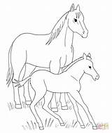 Coloring Horse Pages Foal Horses Printable Spirit Animals Foals Drawing Animal Miniature Template Supercoloring Drawings Clipart Fohlen Mit Colour Sketch sketch template