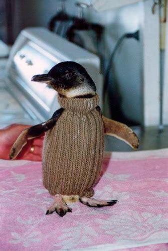 penguin sweater penguin sweater
