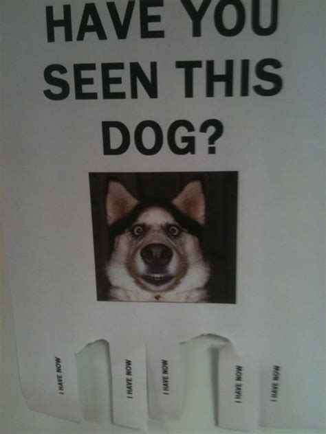 Lost Dog Meme - wrongbutfunny com advertising