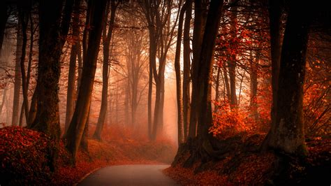 Autumn Wallpapers Hd by Wallpaper Autumn Forest Foliage Hd Nature 3641