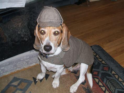 sherlock holmes dog  pet custom  costume