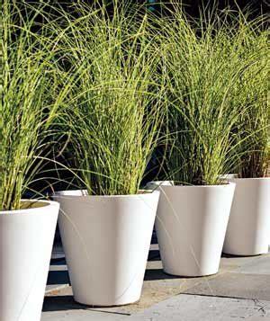 matching pots planted  ornamental grass lend drama