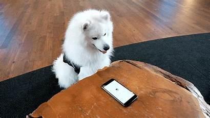 Google Pets April Fools Dog Woof Apps