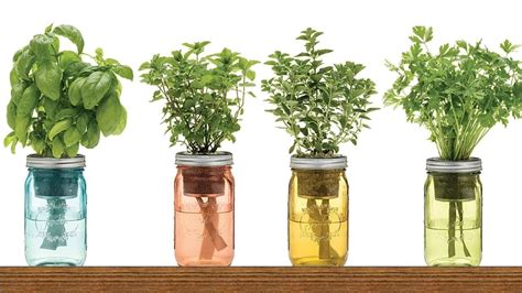 Growing Herbs Inside by 10 Herbs And Vegetables You Can Grow Indoors In Water