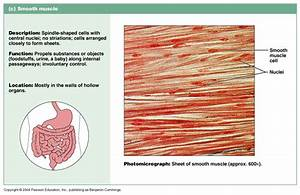 Ch 09 General Muscle Terminology