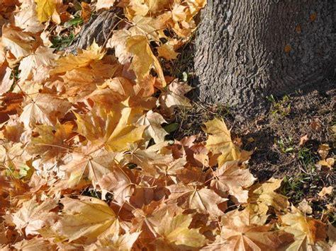 Garten Im Herbst Was Tun by Dein Garten Im Herbst Was Jetzt Zu Tun Ist