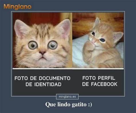 Memes De Gatos - fotos de gatos con frases graciosas frases minglano es pinterest memes humor and snoopy