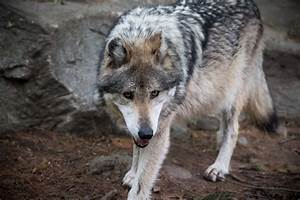 Wildlands Network and Other Conservationists Intend to ...